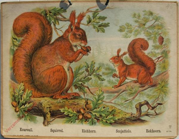 741 - Ecureuil, Squirrel, Eichhorn, Scojattolo, Eekhoorn